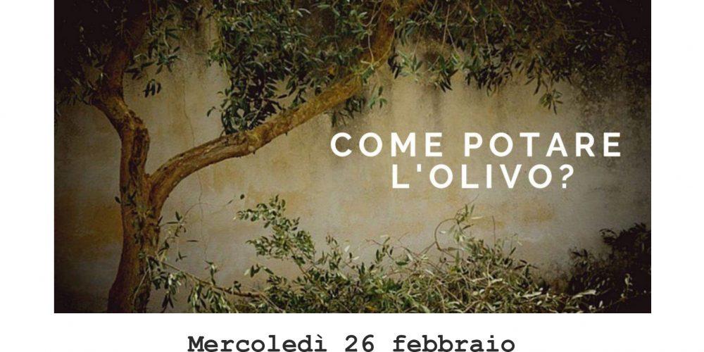 Giornata dedicata alla potatura dell'olivo